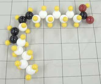 リノール酸.jpg